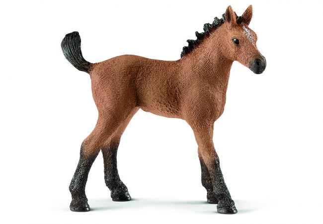 13854_Horse_Club_Quarter_horse